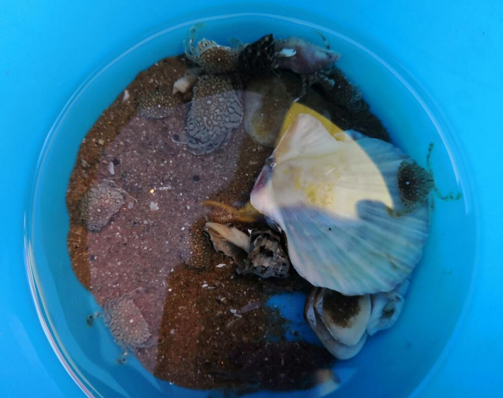 抓螃蟹1.jpg